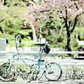 青青子衿1988